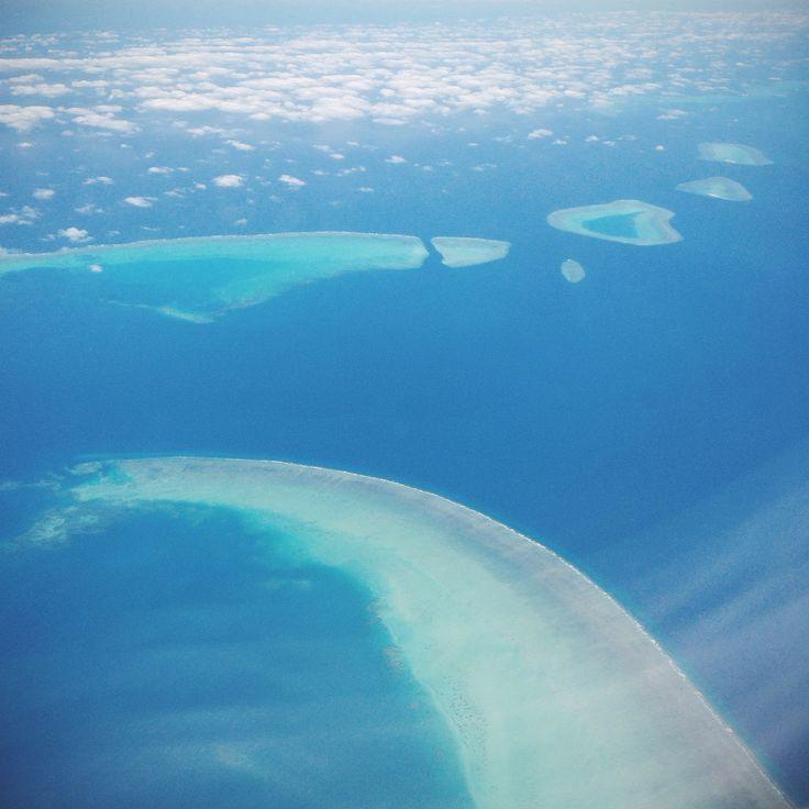 Dugong and lovehearts #coralsea #australia
