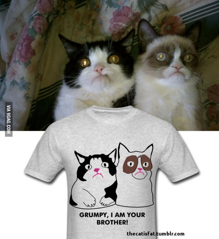 92 Best Pokey, Grumpy Cat's Bro Images On Pinterest
