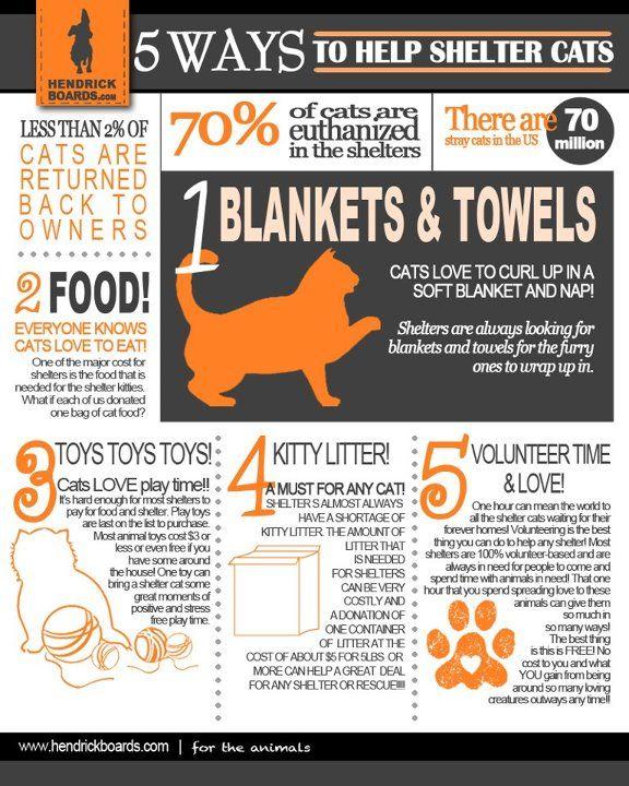 20 best Dog flyer inspiration images on Pinterest Cat stuff - found dog poster template