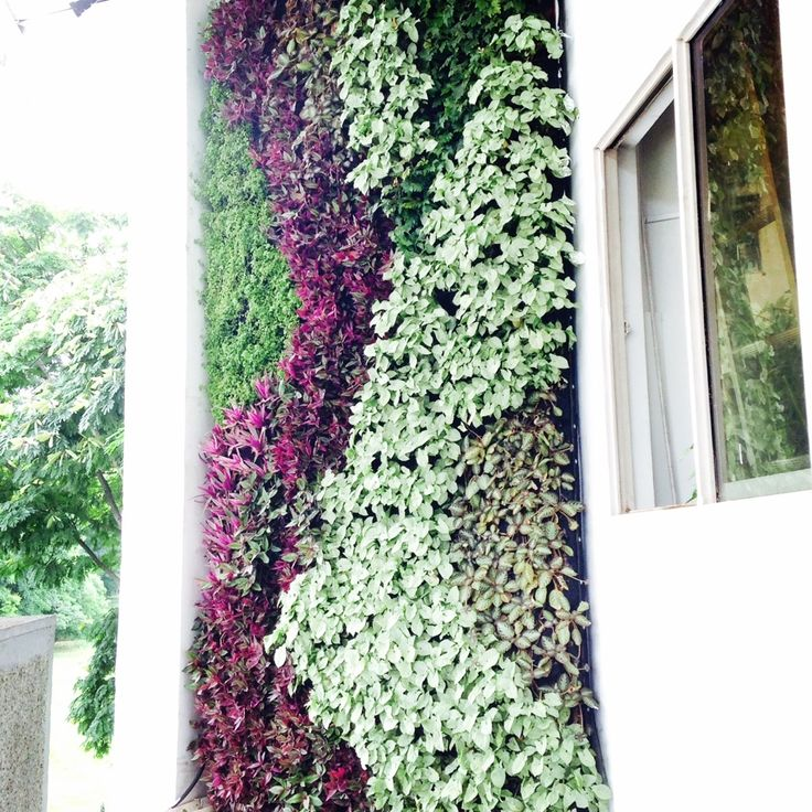 Mejores 99 im genes de jardin vertical en pinterest for Jardin vertical en casa