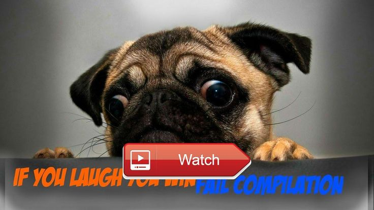 🐙 Funny animals mix if you laugh you win challenge yufkyinc 🐵 weekly compilation of the funniest videos of the most… #funnyanimals