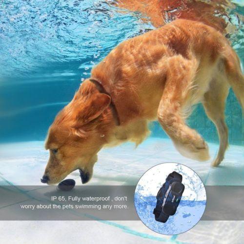 Electronic Dog Collar