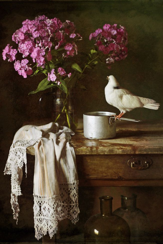 photo: голубок | photographer: Зольга | WWW.PHOTODOM.COM