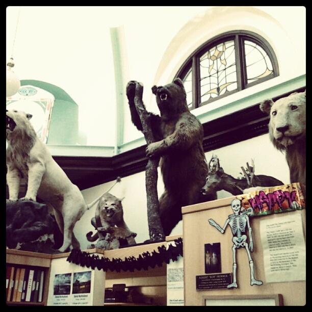 Dormans museum resident animals and skeleton #middlesbrough #teesside #northeast #england #dormansmuseum #animals #taxidermy #bear #webstagram #instagram - @stezbot- #webstagram