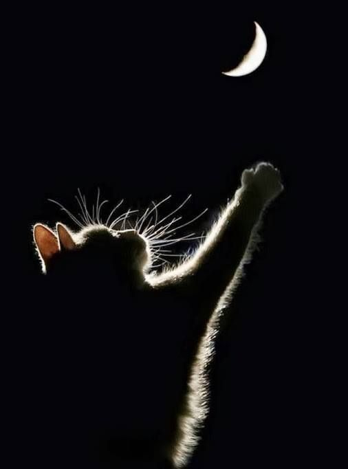 Flying to the moon. Gorgeous shot of a beautiful kitty. - Selected by www.oiamansion.com
