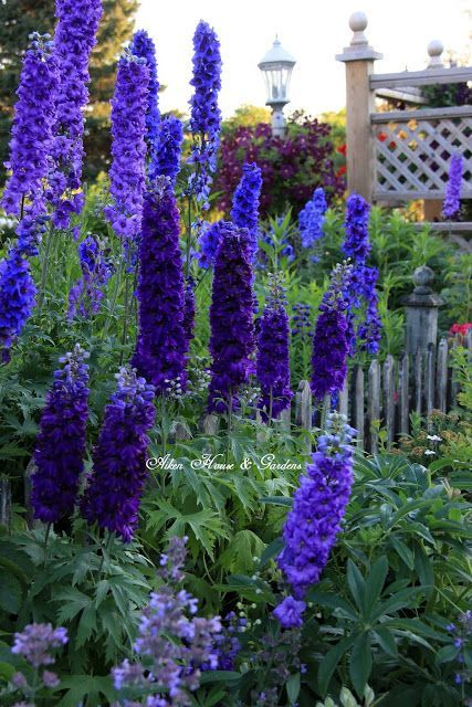 Flower garden idea.