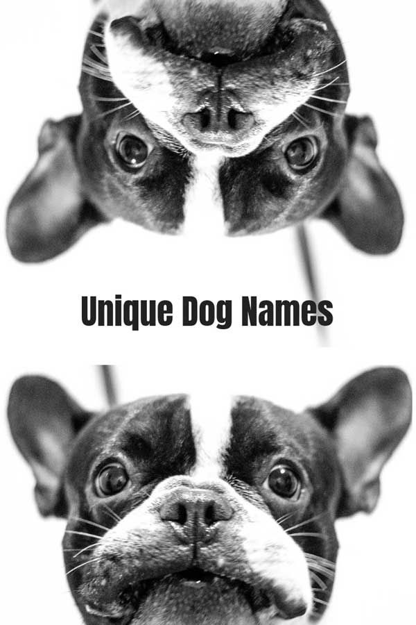 Unique Dog Names With Meanings Dog Names Boy Dog Names Unique