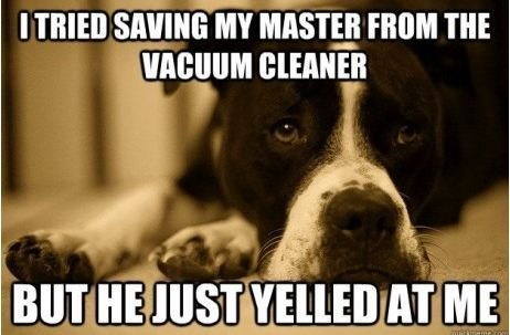 This is so Tucker!! {k}    A dogs life.: Awww, Laughing, Vacuum Cleaners, Pet, Dogs Problems, Giggles, Puppys, Funny Stuff, True Stories