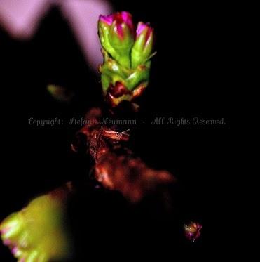 Let Your Potentials Blossom!  - Lasse Deine Potenziale Erblühen!
