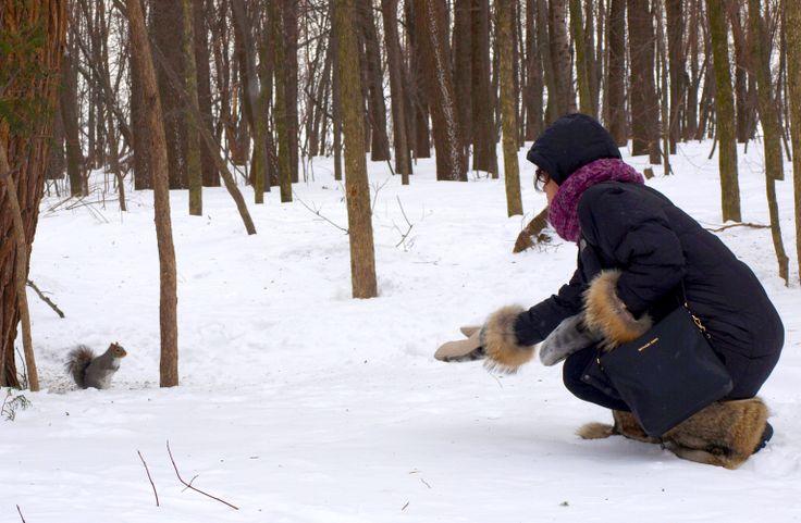 Écureuil, curieux, en pleine nature. / Curious squirrel, at wintertime in the forest.   Bottes: fourrure de coyote Mitaines: fourrure de loup-marin et coyote Natural coyote fur boots and natural seal and coyote mittens