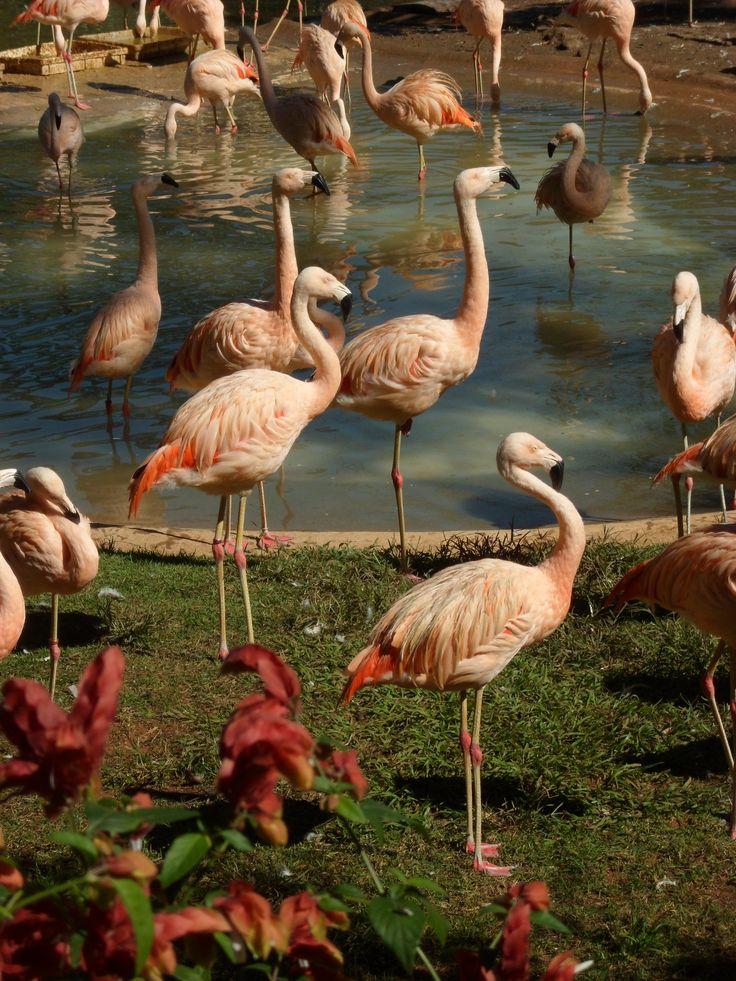 Mais flamingos - Zoo de São Paulo