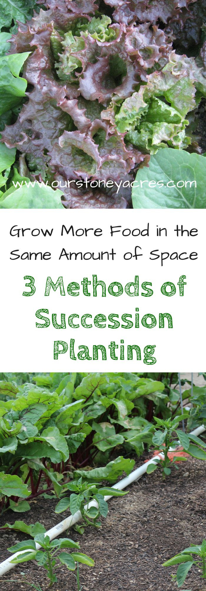 Succession Planting - Succession planting in your backyard garden is a method you can use to increase the production of even the smallest plots.