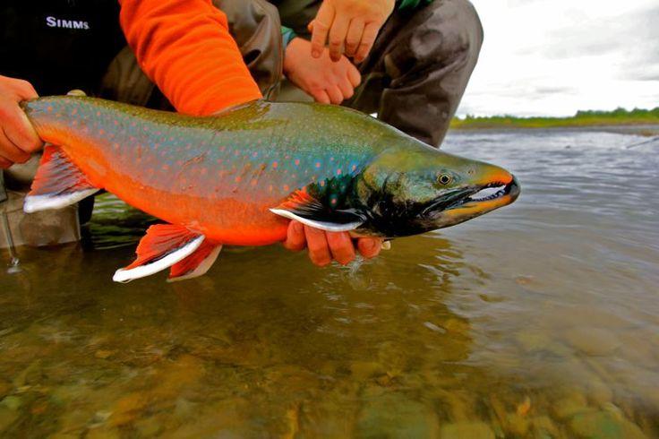 nunavut arctic char fly fishing