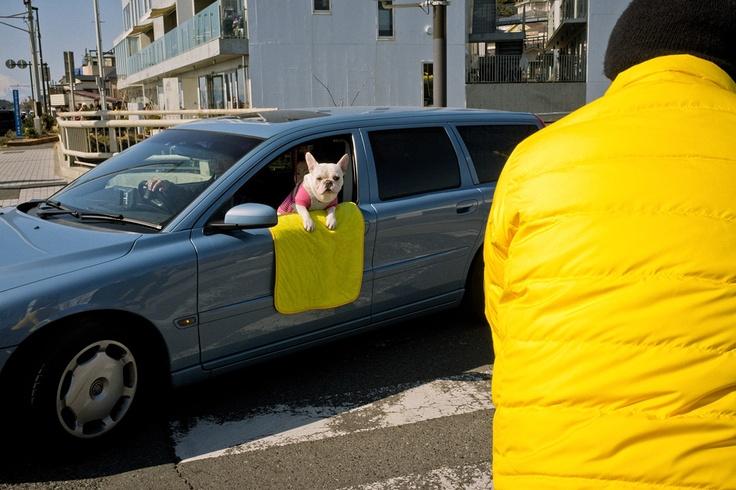 "Shin Noguchi - ""Street Poet With a Camera""    http://www.topphotographyfilms.com/2012/10/05/shin-noguchi/"