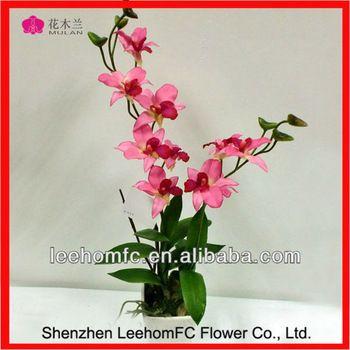 Pretty Cute Natural Mini Orchids For Sale - Buy Mini Orchids ...