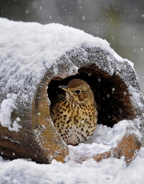Bird taking cover from the snow..