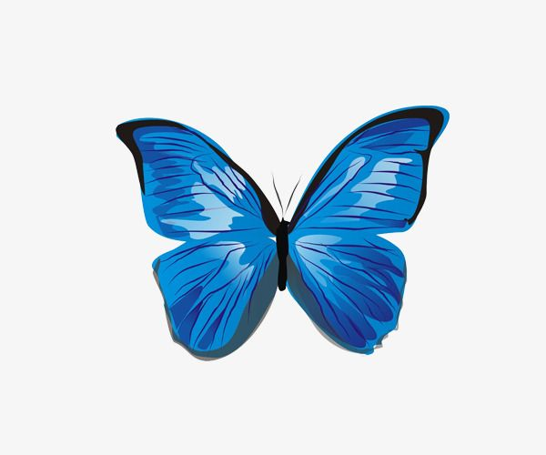 Blue Butterfly Blue Butterfly Butterfly Clip Art Butterfly Pictures