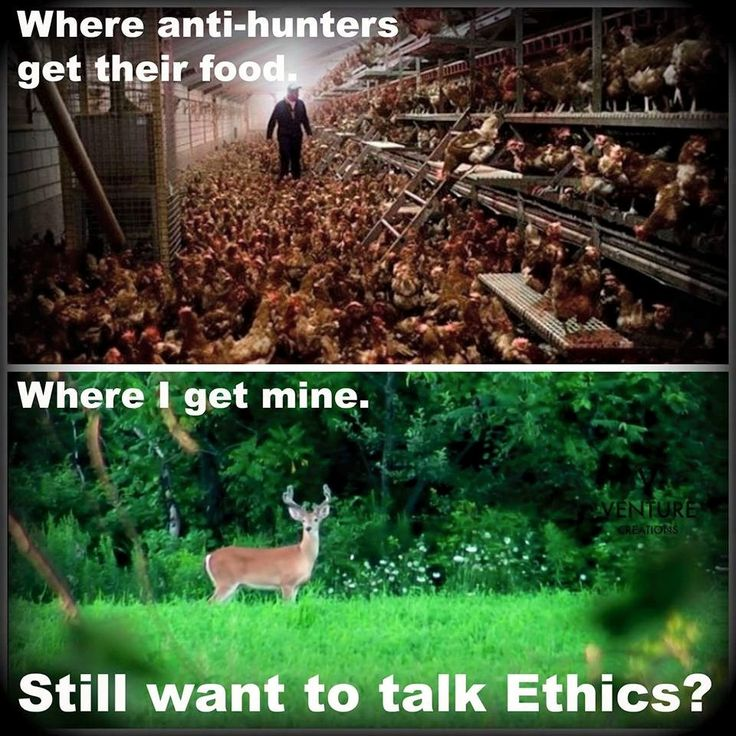 If you are anti hunting and buy your meat at a store then you are a hypocrite. #hunting #freerange #organic