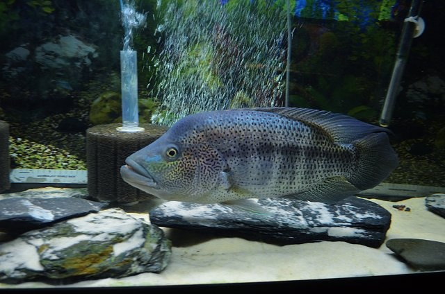 how to keep tropical fish tank crystal clear