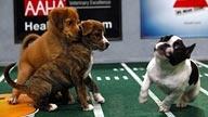And for those of you with NO interest in the East Coast Super Bowl, check out Puppy Bowl VIII on the Animal Planet...starts at 12 PST.  They're ALL rescue puppies.