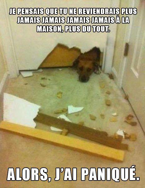 27 photos qui prouvent que les chiens sont des animaux complètement fous ! La 3ème m'a fait hurler de rire...