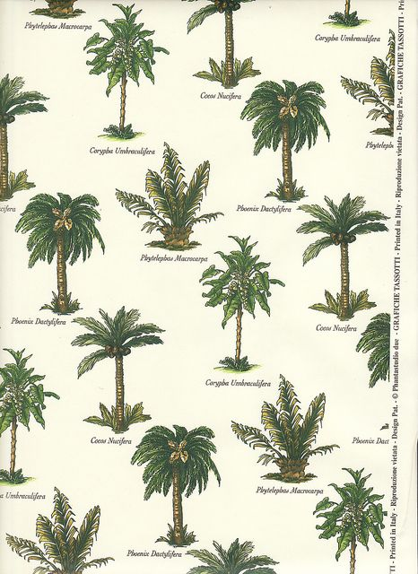 Palm Tree Varieties by Calsidyrose, via Flickr--cute for a wall paper!