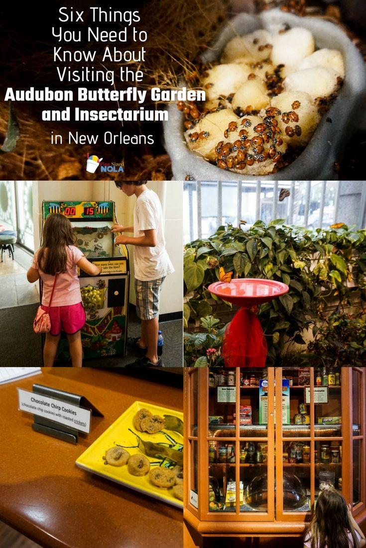 Visiting the Audubon Butterfly Garden and Insectarium | Pinterest ...