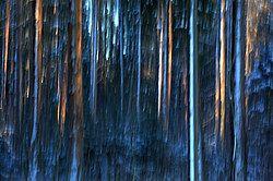 Стволы деревьев в лесу. Эффект