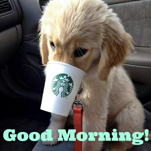 Cute Good Morning In French : Best good morning puppy ideas on pinterest