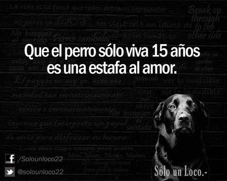 Tengo un Amor de 13 años❤