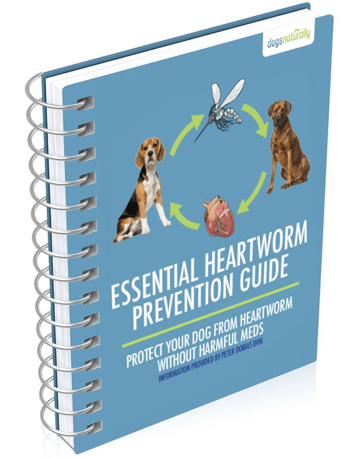 Why I Don't Give My Dogs Heartworm Meds  Yes, you can prevent heartworm in dogs without harmful meds. We'll show you how to safely replace those harmful meds with this simple, inexpensive solution.