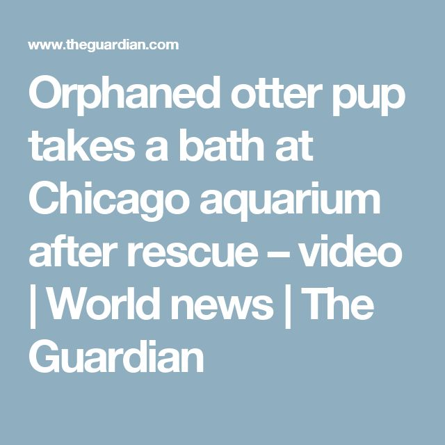 Orphaned otter pup takes a bath at Chicago aquarium after rescue – video | World news | The Guardian