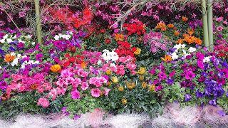 Fiori del mio giardino: Allegorie di Colori