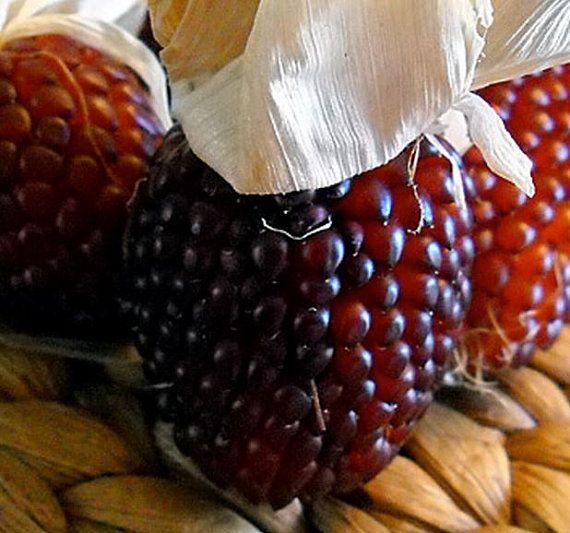 Corn Strawberry Popcorn Seeds  Lovely Ruby Red by thegardenstudio, $2.00