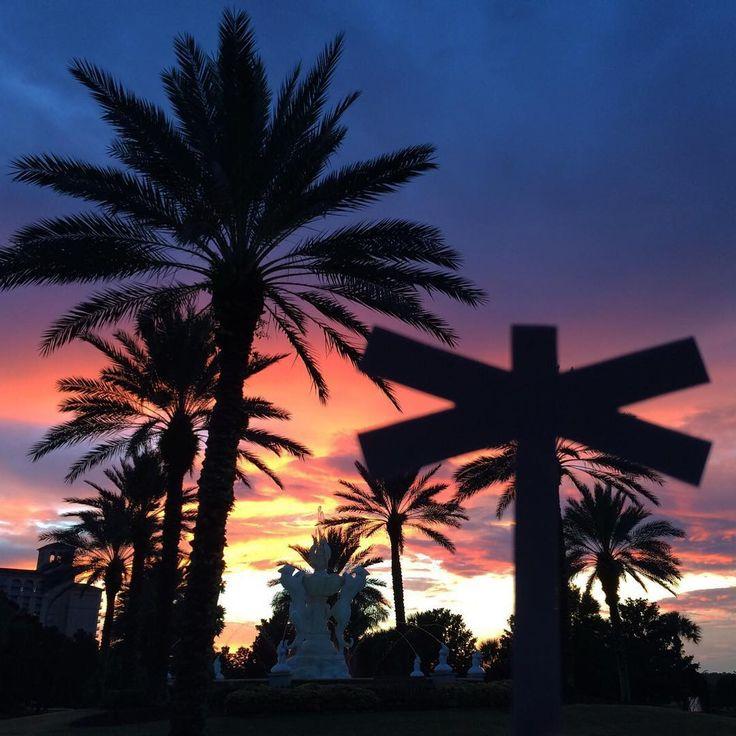 Amongst its kind #PalmEraMia #Sunset #TheBeautyOfNature #Palms
