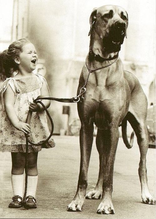 love this! I bet this dog just did something really funny...or the little girl can't get him to move.