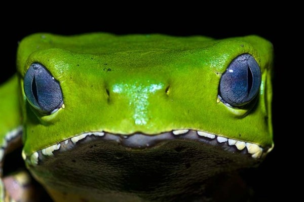 This is Jason Edwards close up photo of a frog. The contrast between the three colours are amazing, this is why I choose this photo.