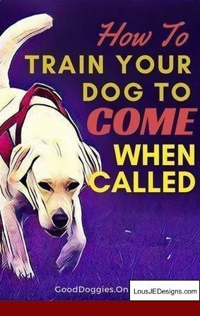 How To Train Your Dog Not To Bark When Left Alone And Pics Of