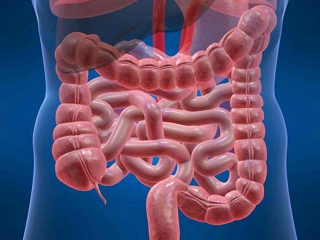 Três receitas caseiras para colite e inflamações no intestino | Cura pela Natureza.com.br