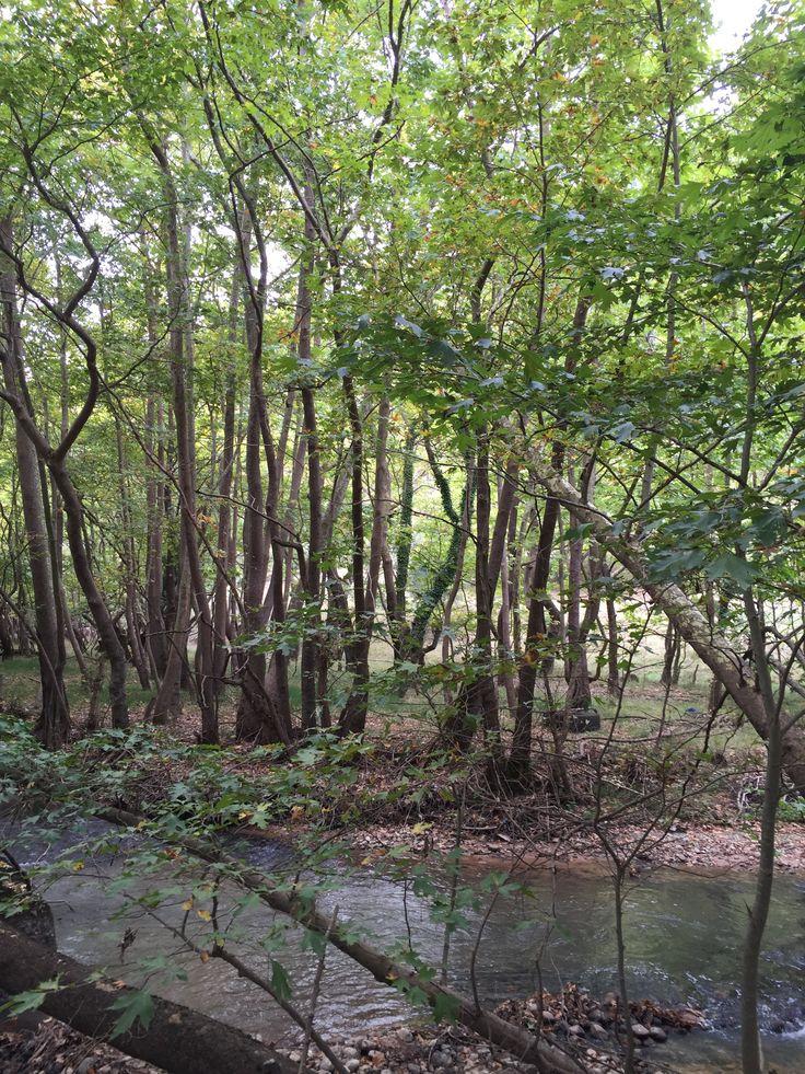 23.  River landscape.  Kalavrita, Greece (Zachlorou area)