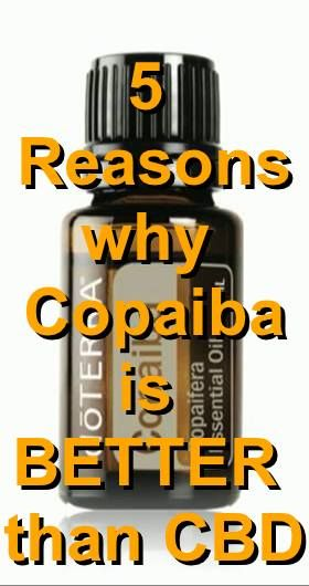 5 reasons why Copaiba Essential oil is BETTER than CBD.