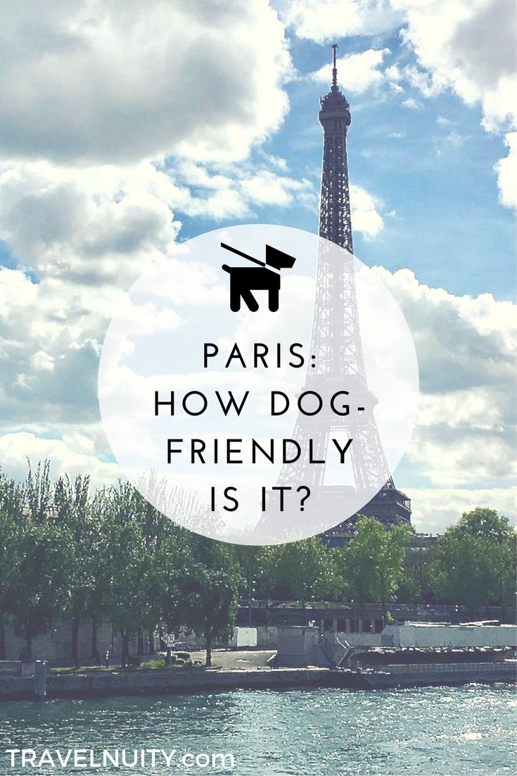 Is Paris really as dog-friendly as everyone thinks it is? Cathi Bert-Roussel explains where pets are and aren't welcome in Paris. #dogfriendlyparis #paris #dogtravel