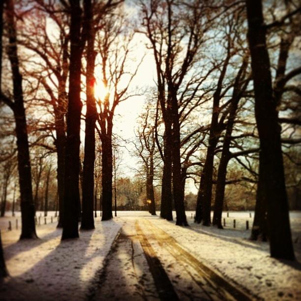 Good morning in the forest of Twickel - @marcel_tettero- #webstagram