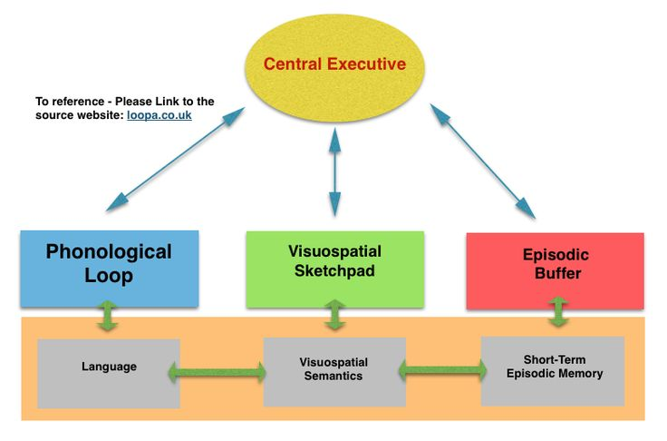 psychology essay structure a level Structure: essays should make an argument: your essay should have a point and   hypothesis is based on an oversimplified and inadequate psychological.