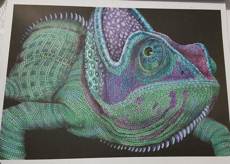 Chameleon By Shan Renea