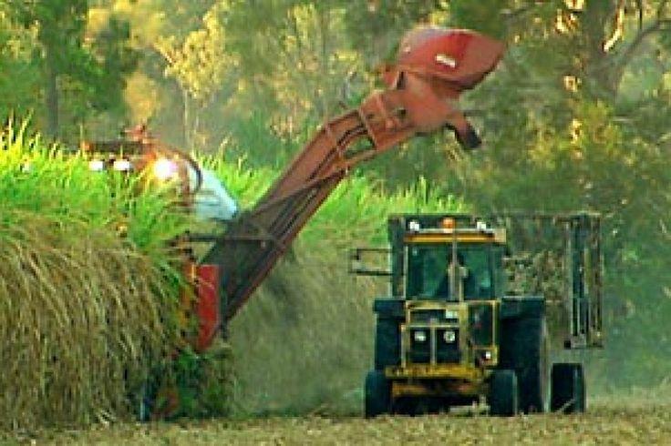 Sugarcane harvest - Elarish in Far Norh QLD
