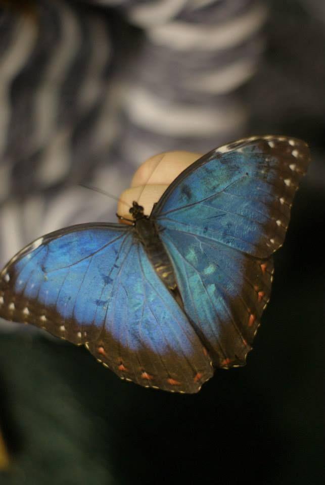 flora i faunahttps://www.facebook.com/pages/R%C4%99koczyny-Katarzyny/749456888458736?ref=hl