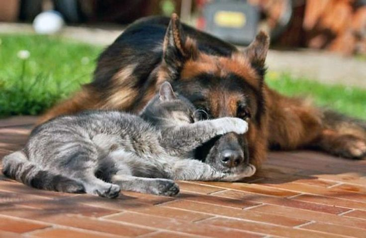 #Cat and #dogs beautiful bond that can be growth between them over time!! It will mean a lot if you guys like, repin or share with friends and family (:  thank you.