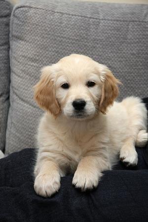 What a cutie! by FrancesCollins