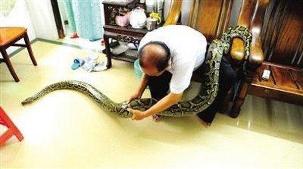 un couple de personnes âgées élève un python comme leur enfant  2Tout2Rien